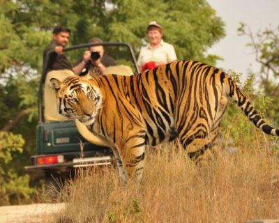 WILDLIFE TOUR PACKAGES​